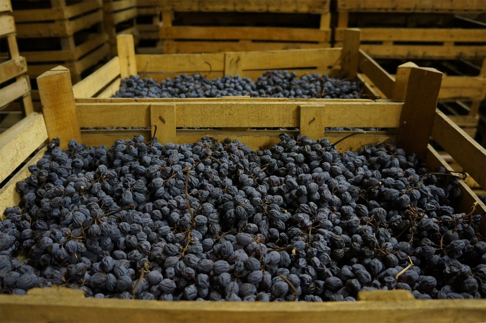 amarone-grapes-drying-out