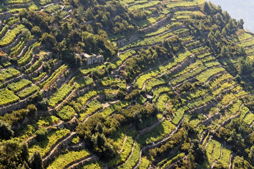 liguria-terraced-vineyards-in-cinque-terre